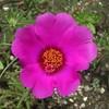 花の中に花を発見
