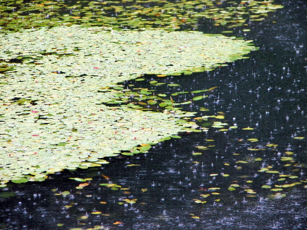 乗鞍温泉の池