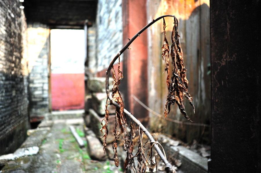 廃墟の枯れ草