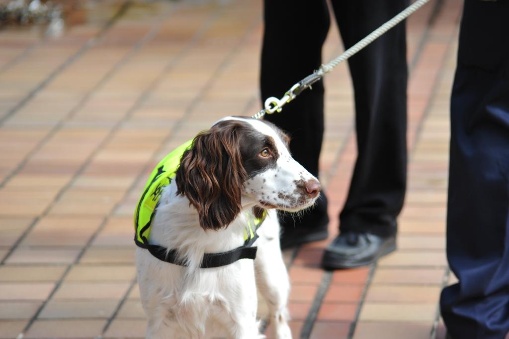 香港警備犬!!