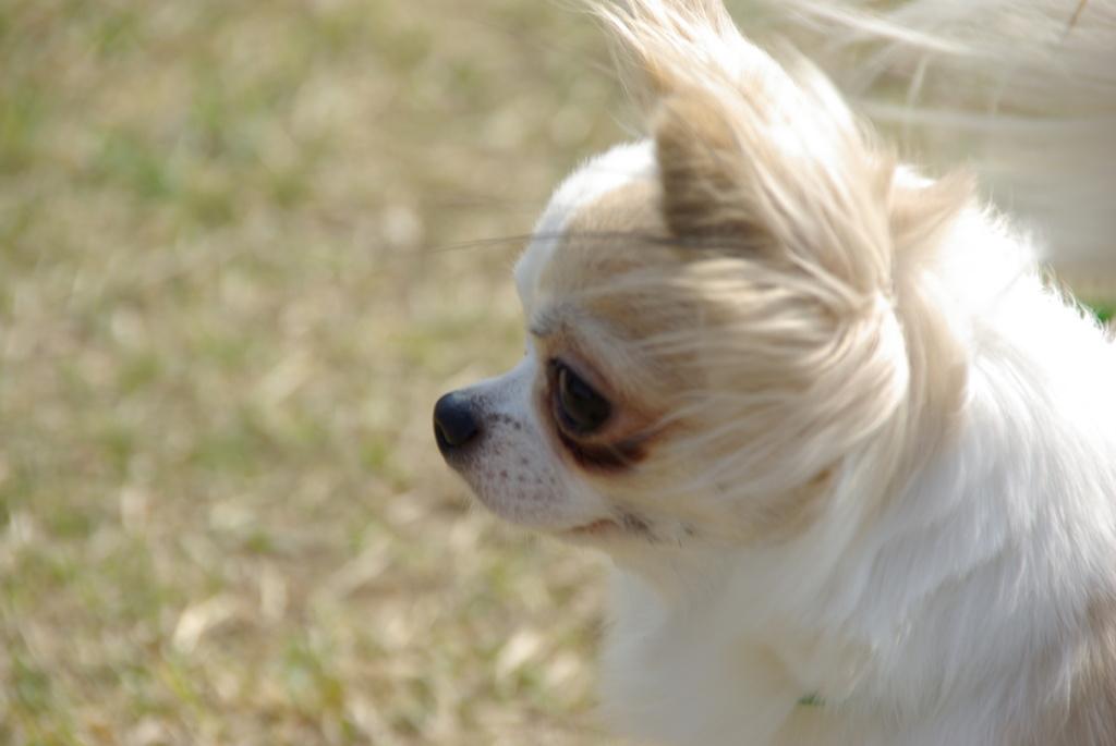 風にふかれて