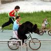 熊と猿の自転車乗り