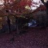 秋なので紅葉