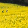 黄色い空間