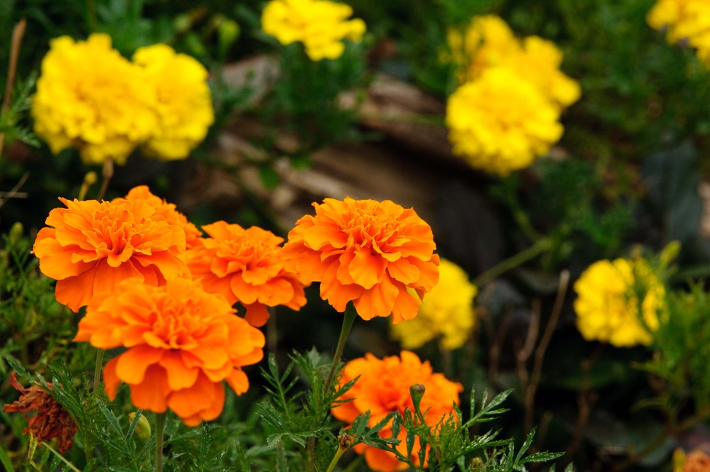 公園で見つけた花