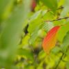 もうすぐ秋