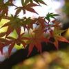 ペン昭和記念公園 268