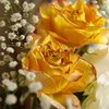 1月のバラ 終焉の美