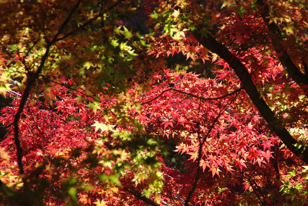 ペン昭和記念公園 189