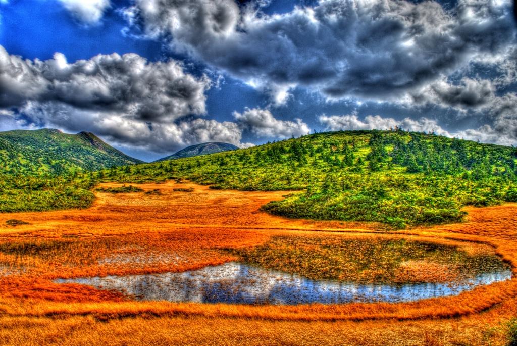 昼時の湿原