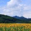 あの夏の向日葵畑