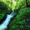 ある森の中の 小さな川