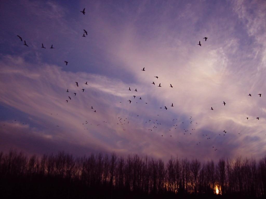 The flock of birds@ALASKA