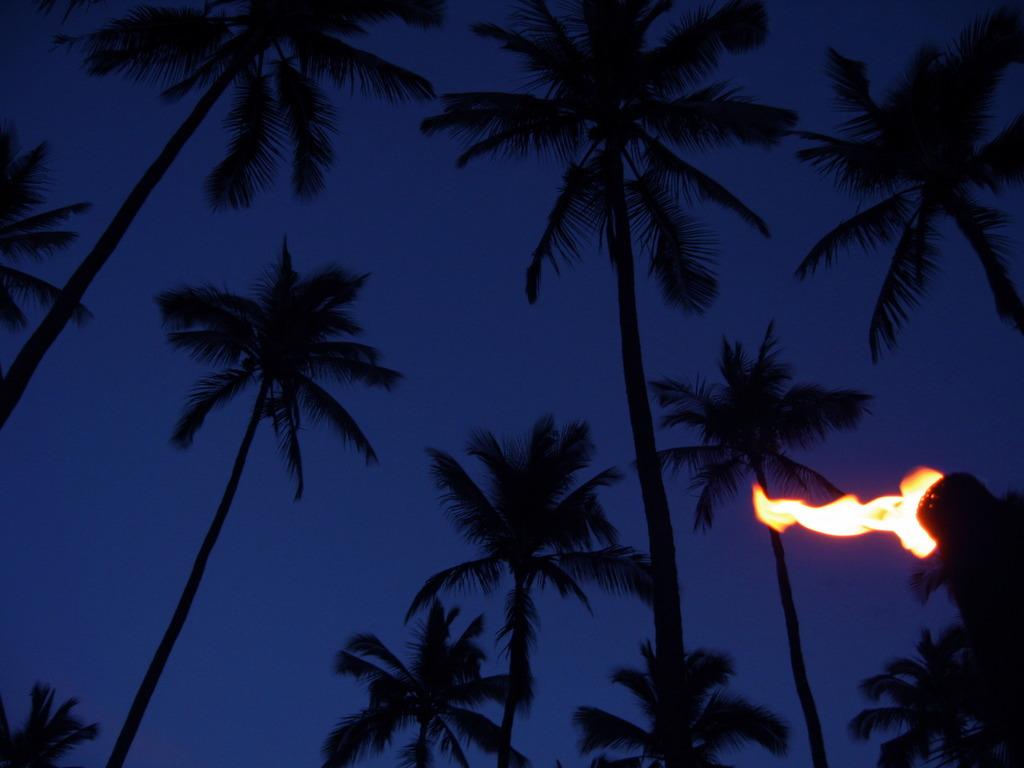 PALM&FAIRE@KAUAI HAWAII