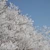 御在所ロープウェイ 樹氷02