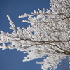 御在所ロープウェイ 樹氷01