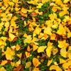 散りゆく秋