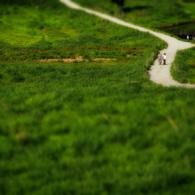 その他のカメラメーカー その他のカメラで撮影した風景(『ノルウェイの森』ロケ地の砥峰高原)の写真(画像)