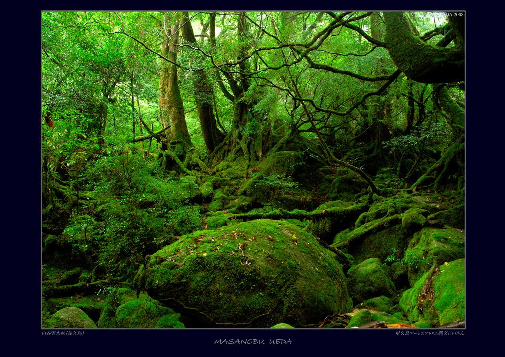 屋久島の画像 p1_13