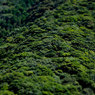 CANON Canon EOS 5D Mark IIで撮影した風景(山肌)の写真(画像)