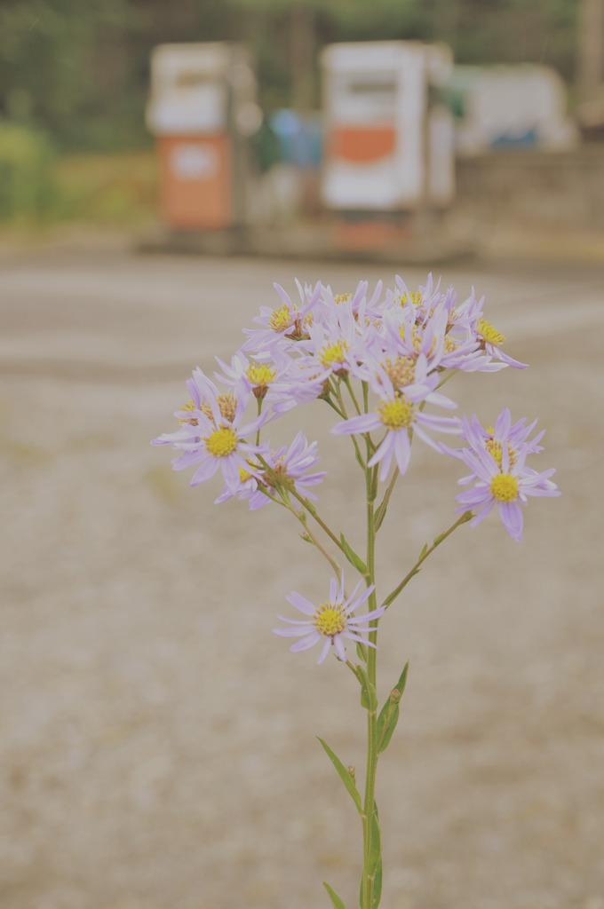 花とガソリン