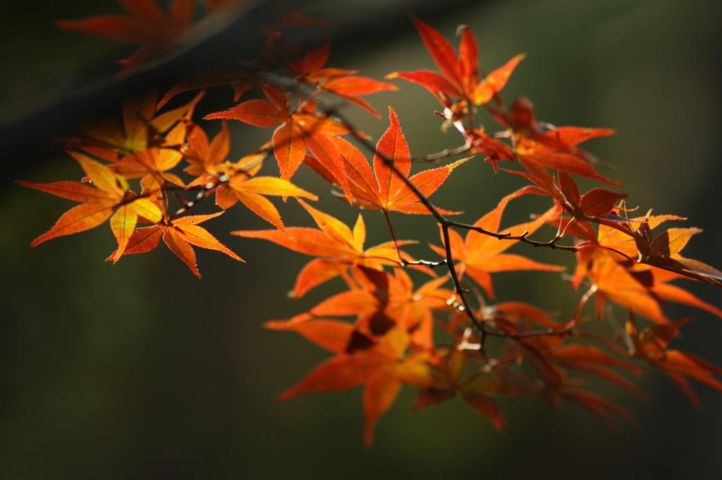 秋の色づき3