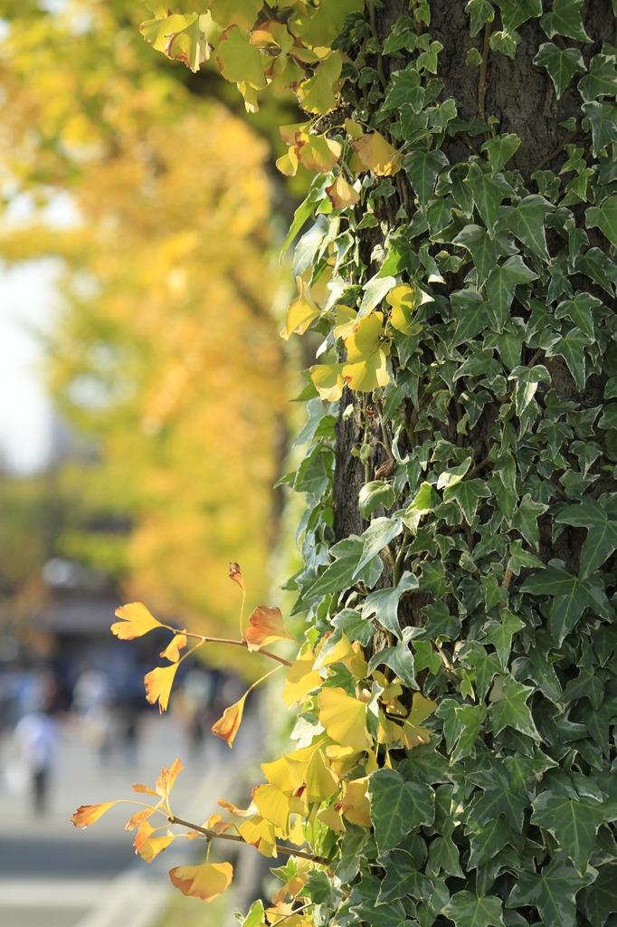 緑と黄色のコントラスト
