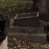 外国人墓地のボス