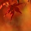 秋の色づき2