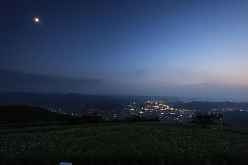コスモス畑に月明かり