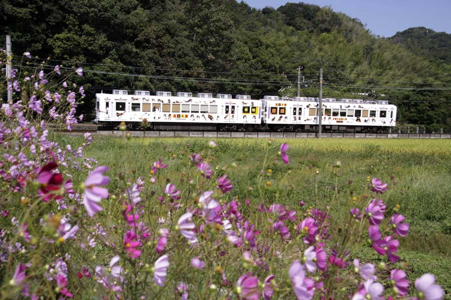 たま電車とコスモス