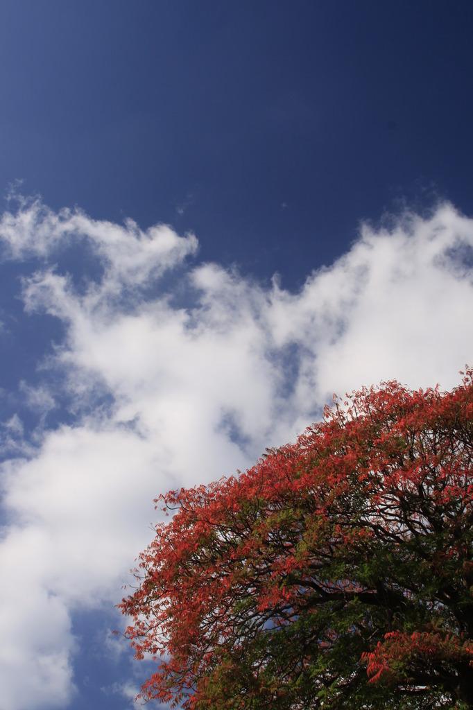 秋晴れの下
