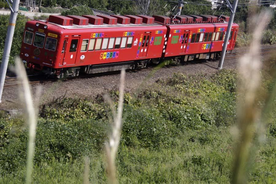 おもちゃ電車とススキ