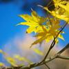 秋の極意^^