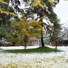 イチョウ落葉+雪=冬近い