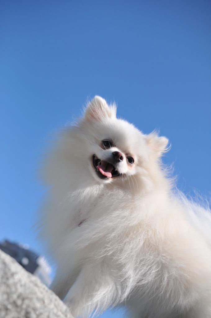 青い空に白い雲・・みたい。