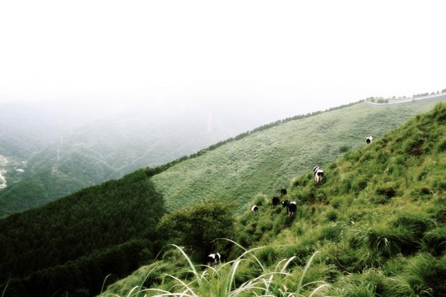 山を越える牛たち