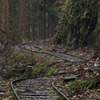 森林軌道1