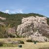 平安郷 桜