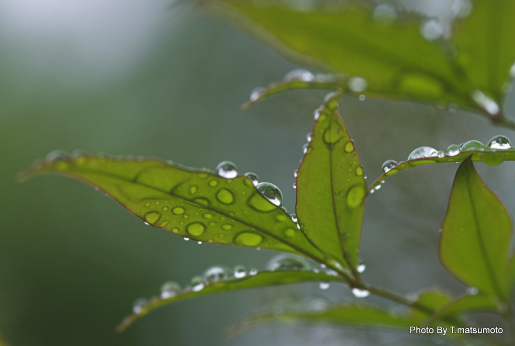雨上がり・・朝