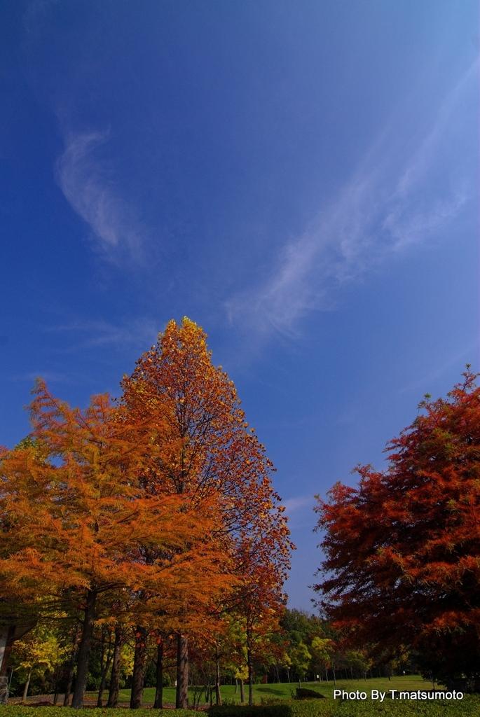 秋の空・高く