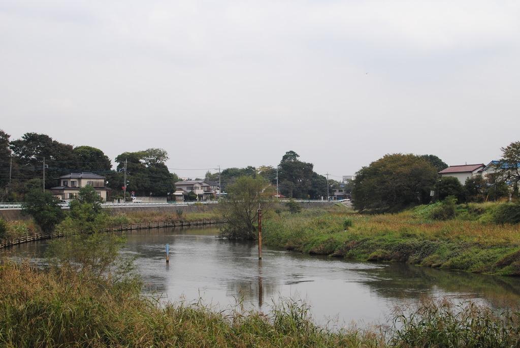 50年見続けた川