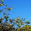 晩秋の空は青い!