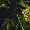 night view palau 2