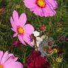 花&蜻蛉♪