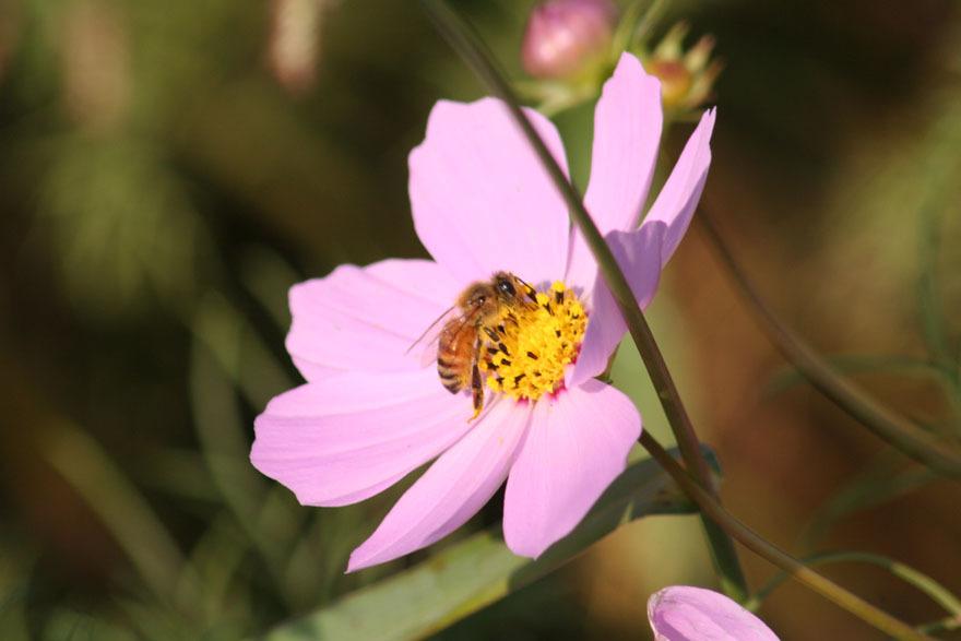 花&蜂♪2
