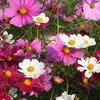花&蜂&ケムシ♪