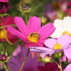 花&蜂♪3