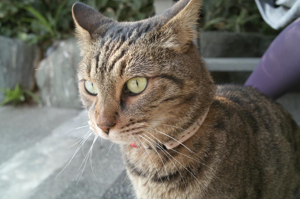 猫(祭りの後)
