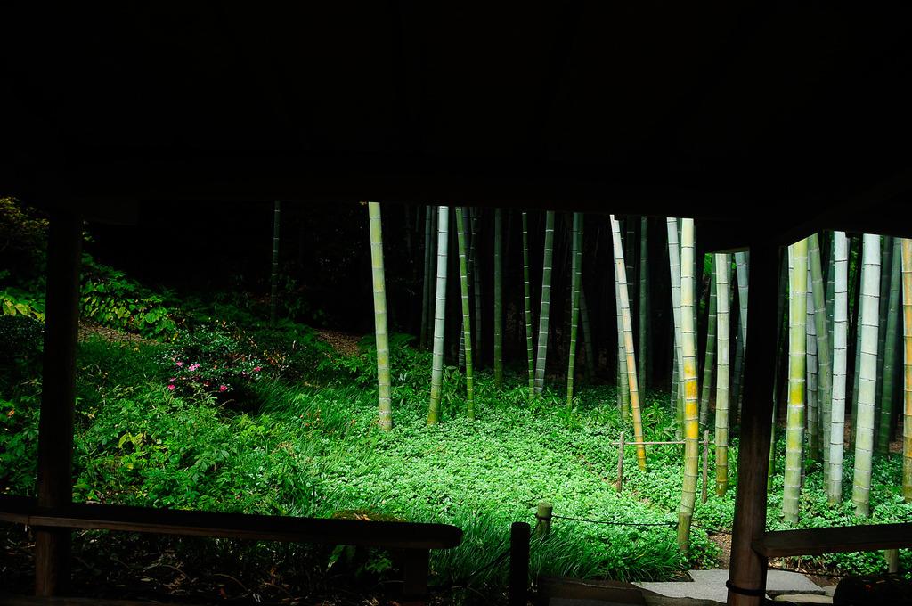 竹の寺(2)